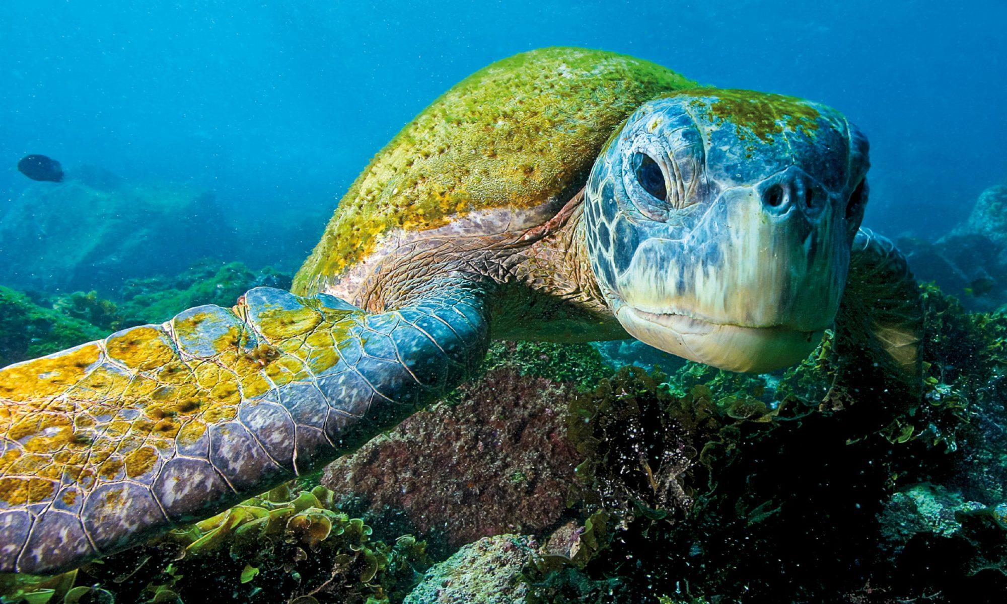 NEW OCEAN PROJECTS.COM