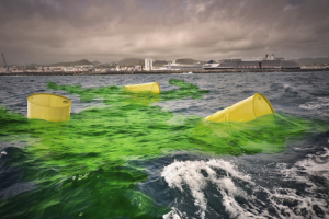 old yellow barrels for biohazard waste drift on dirty green water.